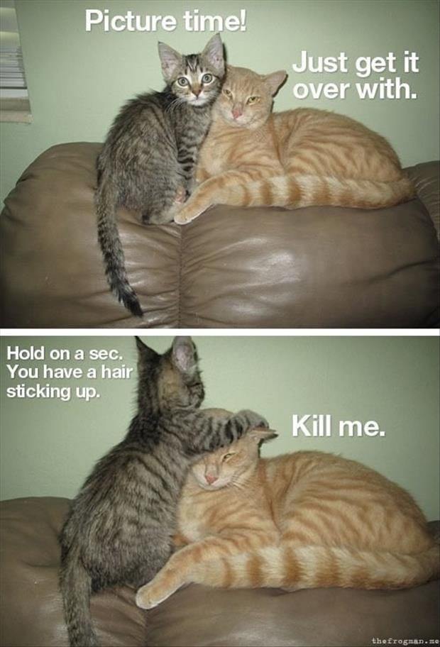 30 Funny animal captions - This one reminds me of me and my sister.