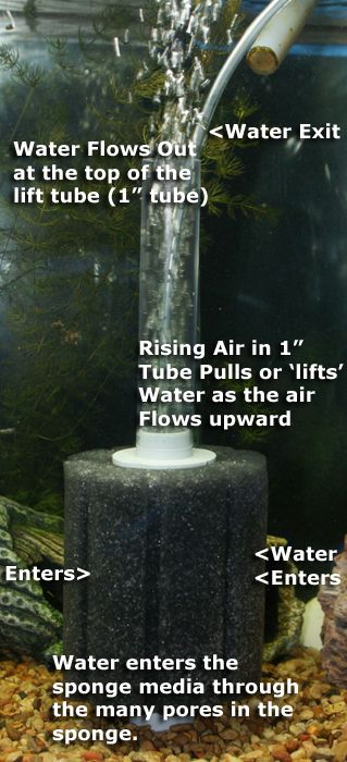 Sponge Filter with air pump diagram, for filtration
