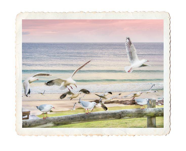 Seagulls, Merimbula Australia