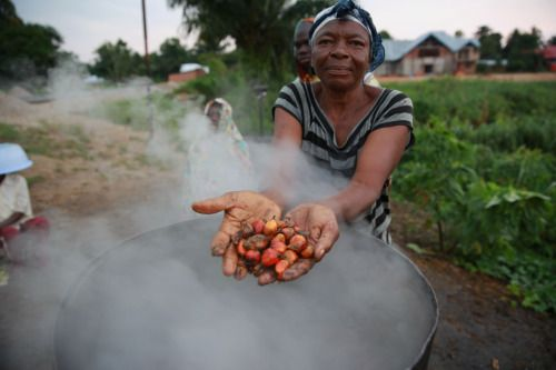 Kisangani, Eastern Province, DR Congo. Congolese Woman processing palm oil to be used for food consumption and soap manufacturing. 2 January 2015. Abel Kavanagh