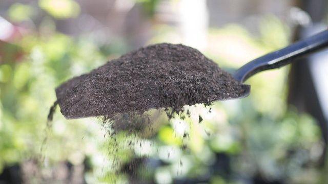 Spaten Eignet Sich Nicht Fur Jeden Garten Gartenwerkzeug Garten Rasenkanten