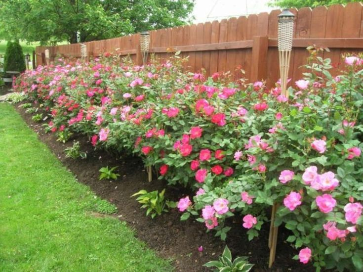 Colorful Landscaping Ideas With Low Maintenance Flower
