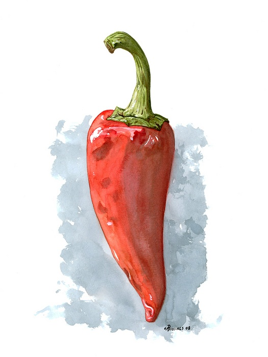 Day 22 - Red.  Pepper   - watercolor by Anthony Billings