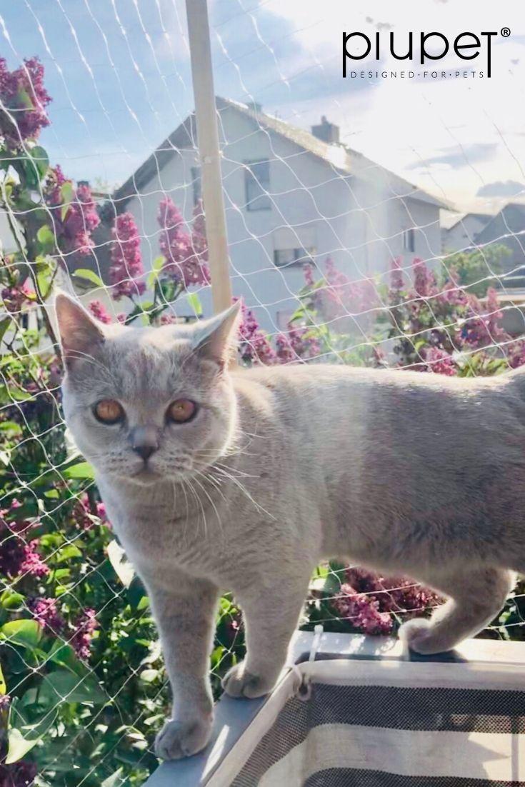 Balkon Ideen Fur Katzenliebhaber In 2020 Katzenliebhaber Katzen Katze Balkon