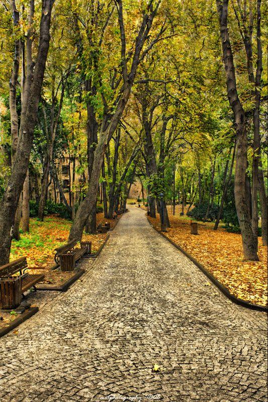 Autumn Leaves, Istanbul, Turkey  Fascinating Istanbul  http://www.travelandtransitions.com/destinations/destination-advice/europe/istanbul-travel-hagia-sophia-blue-mosque-topkapi-palace/