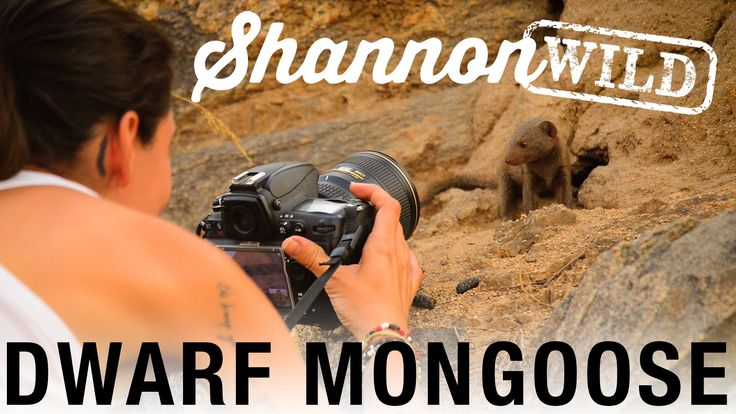 Shannon Wild Photographing Dwarf Mongoose