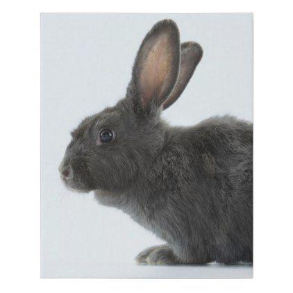 A Rare Silver Fox Heirloom Rabbit Faux Canvas Print -nature diy customize sprecial design