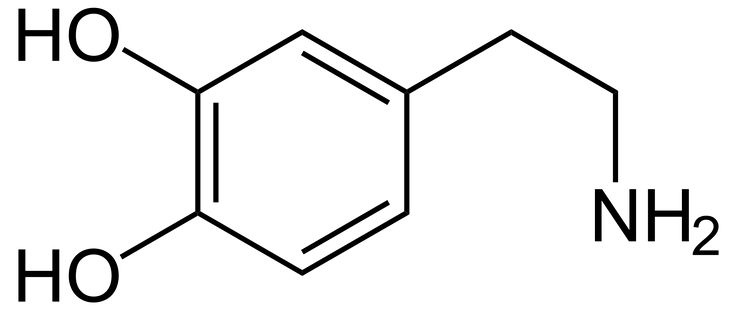 Dopamine receptor - Wikipedia