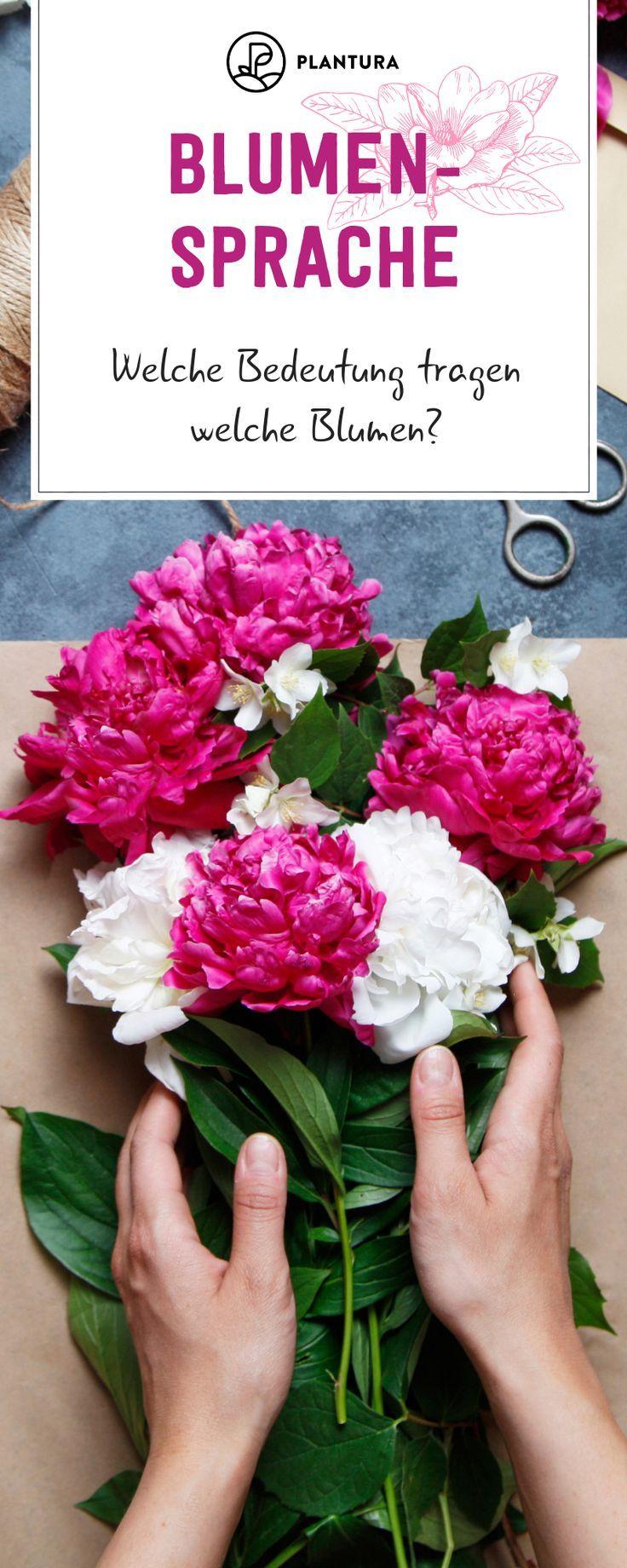 Blumensprache Welche Blume Hat Welche Bedeutung Bedeutung Blume Blumensprache Hat We Sprache Der Blumen Bedeutung Von Blumen Blumen