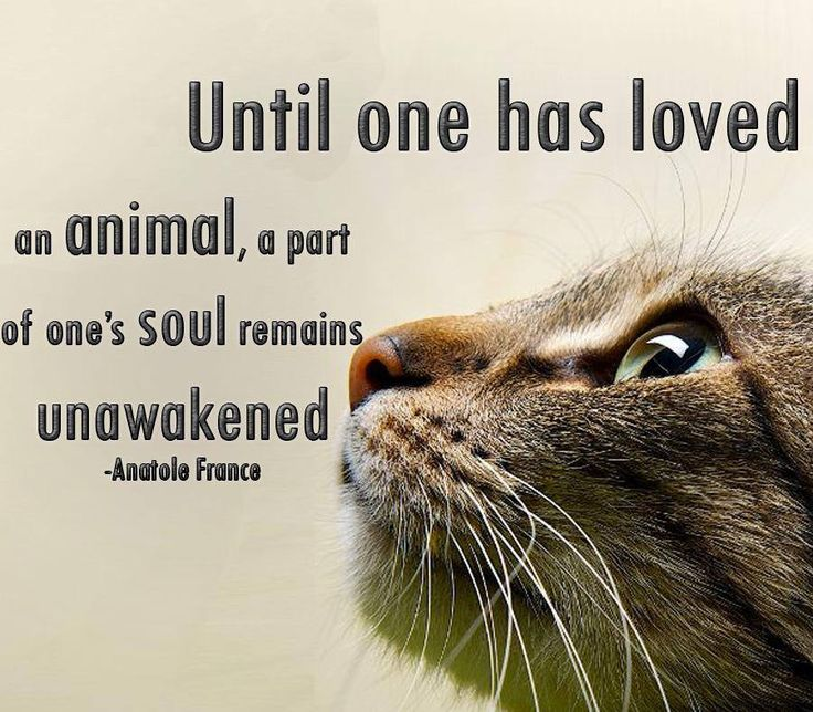 Until one has loved an animal, a part of one's soul remains unawakend. – Anatole France #PetPoolWarehouse #SundayMotivation