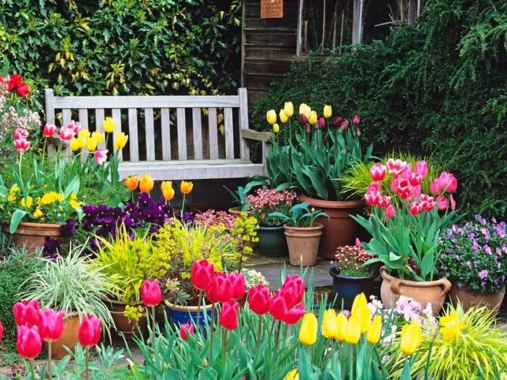 как красиво посадить тюльпаны на участке фото: 14 тыс ...