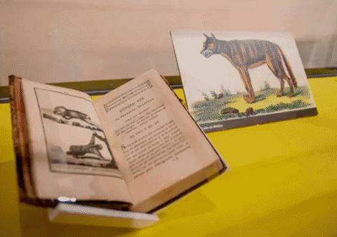 """La exposición """"La Historia Natural del Conde de Buffon"""" en #BibliotecaFranciscana."""