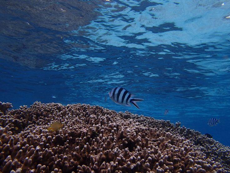 冬でも楽しい沖縄旅行でダイビング! - http://www.natural-blue.net/blog/info_10035.html