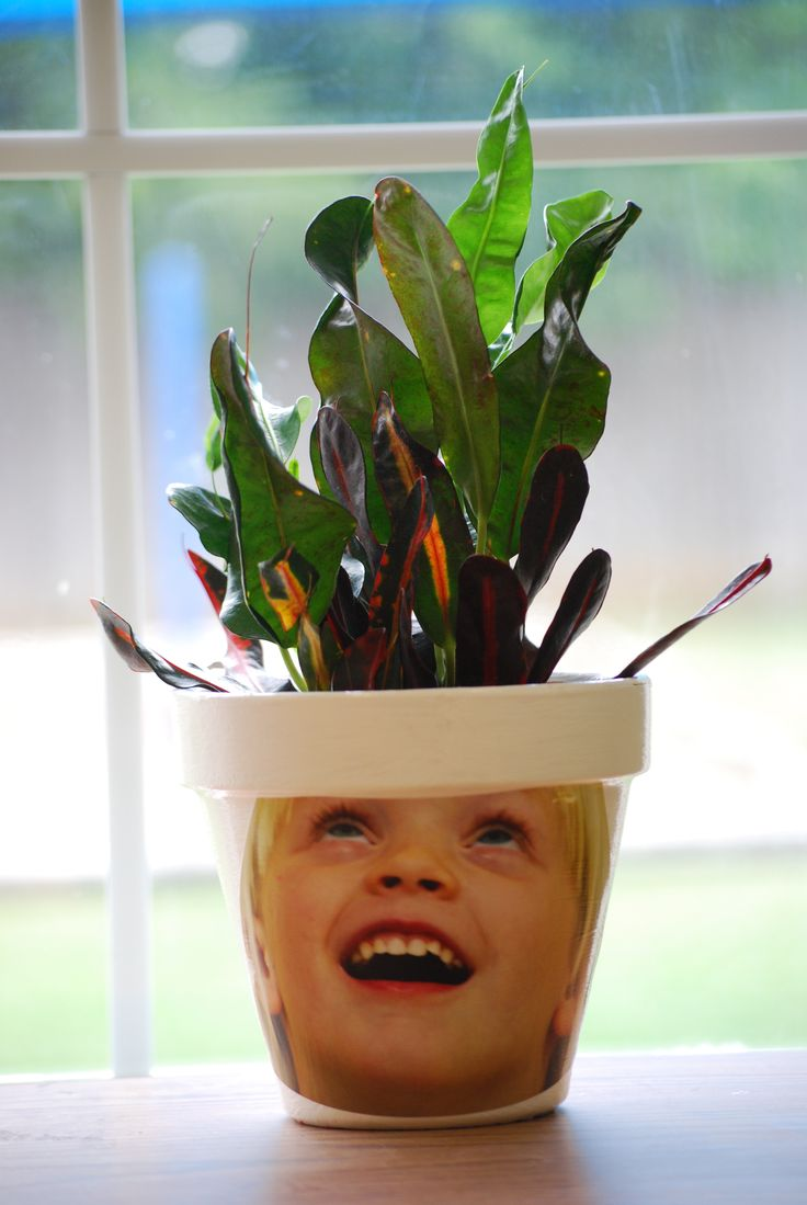 Best 25 graduation crafts ideas on pinterest graduation for Flower heads for crafts
