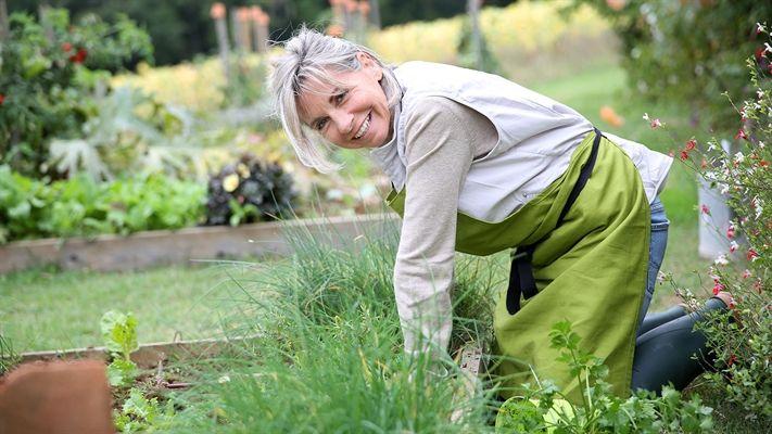 DIY herb garden   OverSixty