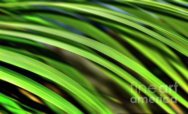 #Palm #Abstract by #Kaye_Menner #Photography Quality Prints Cards Products at: http://kaye-menner.pixels.com/featured/palm-abstract-by-kaye-menner-kaye-menner.html