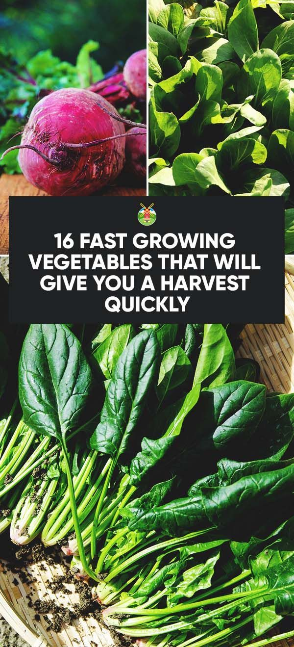 16 Fast Growing Vegetables That Will Give You Harvest 400 x 300
