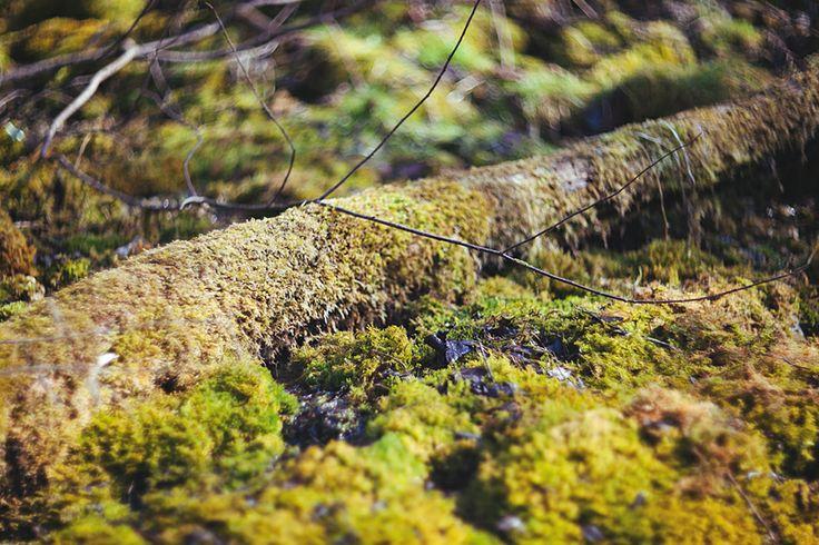 лето весна лес summer spring forest tree moss мох