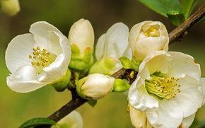 Обои цветение, весна, ветка, макро