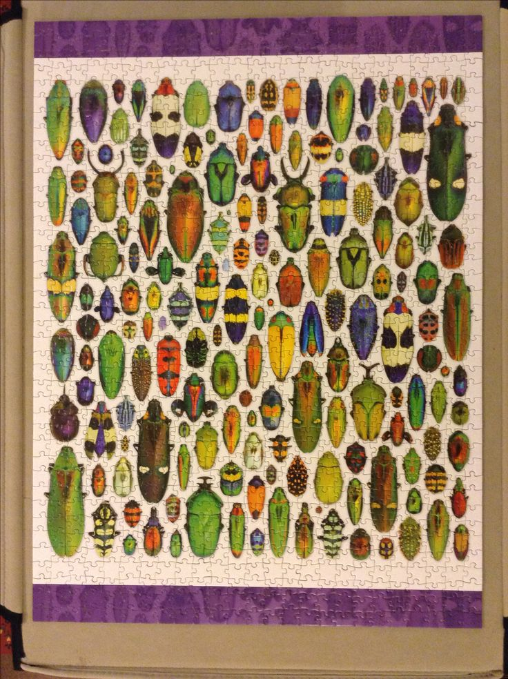 A Bounty of Beetles, Exquisite Creatures, inherited from Deb