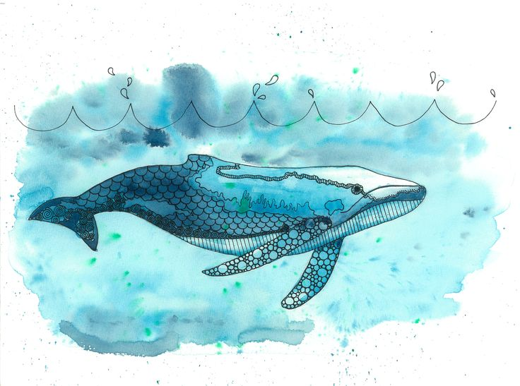 Humpback whale - Wine & Untangle