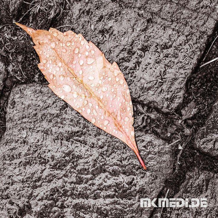 Markus Medinger Picture of the Day   Bild des Tages 05.11.2017   www.mkmedi.de #mkmedi  #blatt #leaf #herbst #autumn #natur #tropfen #drops  #remstal #badenwuerttemberg #germany #deutschland  #instagood #photography #photo #art #photographer #exposure #composition #focus #capture #moment  #365picture #365DailyPicture #pictureoftheday #bilddestages #nature #hdr  @badenwuerttemberg @visitbawu @0711stgtcty @deinstuttgart @0711stgtcty@stuttgart.places @ig_stuttgart @geheimtippstuttgart…