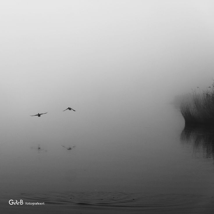 here and there foggy - #GdeBfotografeert