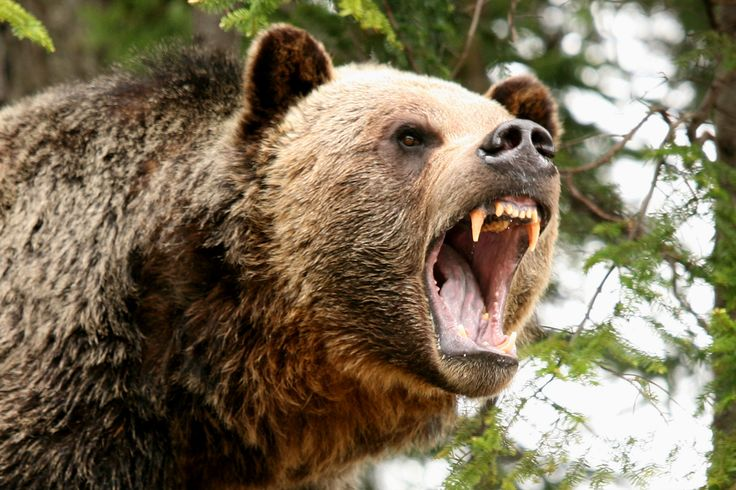 The 'Oil Bear' Roars As The Week Comes To An End: Here's Why - As the week comes to an end, the 'bear' continues roaring in global oil markets... TheSurge.com