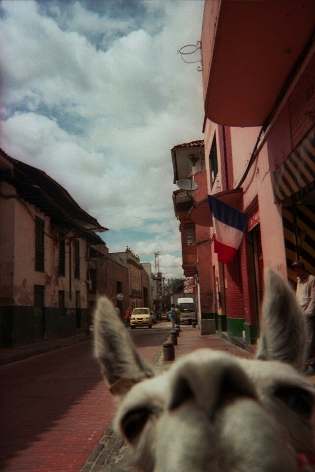 Llama selfie @Amy Lyons Lyons Louise Francoeur @Karen Jacot Jacot Brown @Katie Hrubec Hrubec Murray