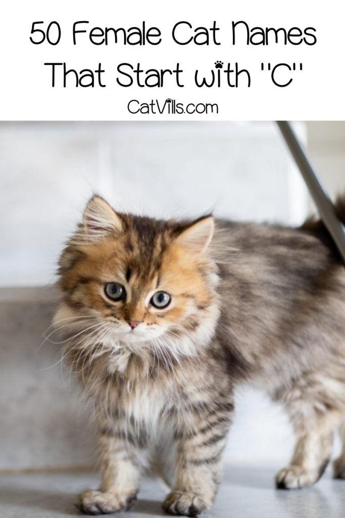 100 Cat Names That Start With C Catvills In 2020 Cat Names Kitten Names Cute Cat Names