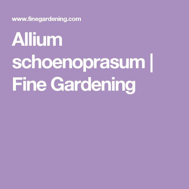 Allium schoenoprasum | Fine Gardening