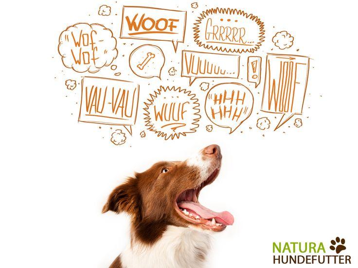 29 best aktuelles images on pinterest dog food doggies. Black Bedroom Furniture Sets. Home Design Ideas
