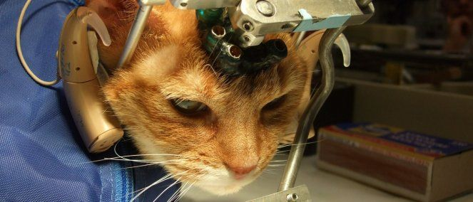 Terminemos con los experimentos con animales en España!