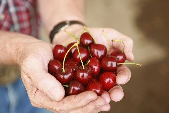 Curious about the benefits of Montmorency Cherries? Learn more here! Just click this photo.   Healthy Eating