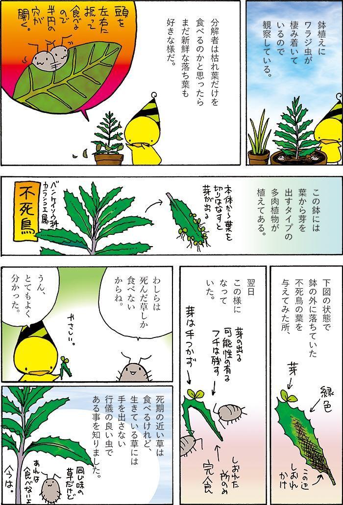 夏なので自由研究をしました。虫漫画注意。#虫 #ワラジムシ #自由研究