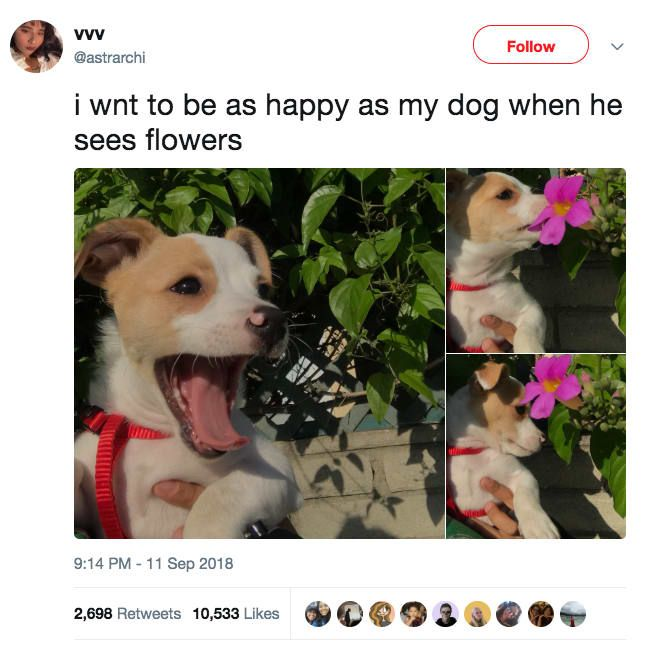 24 Adorable Animal Tweets That Ll Make You Feel Better For At