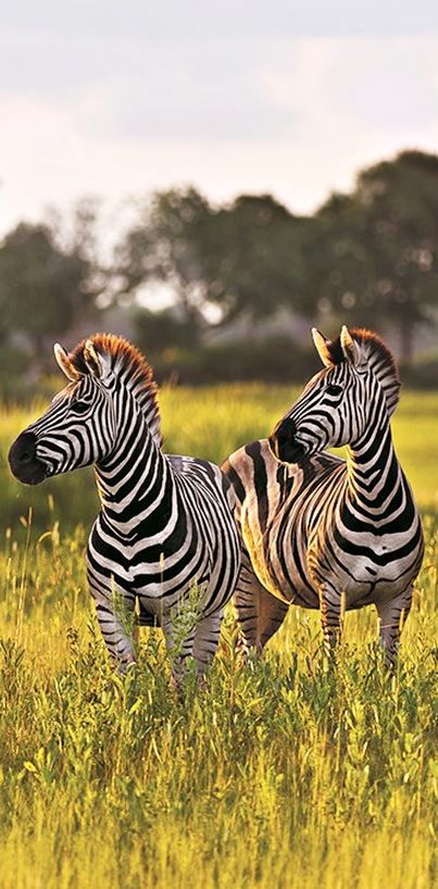 Go on a safari in Cape Town, South Africa