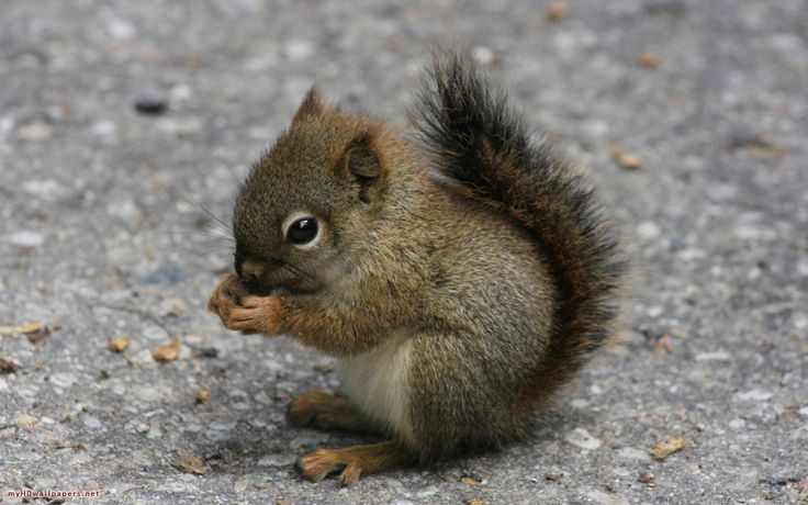 AHHHH - i want every baby animal possible!: So Cute, Pet, Baby Squirrels, Babysquirrel, Adorable, Things, Baby Animals,  Sciurus Niger,  Eastern Foxes Squirrels