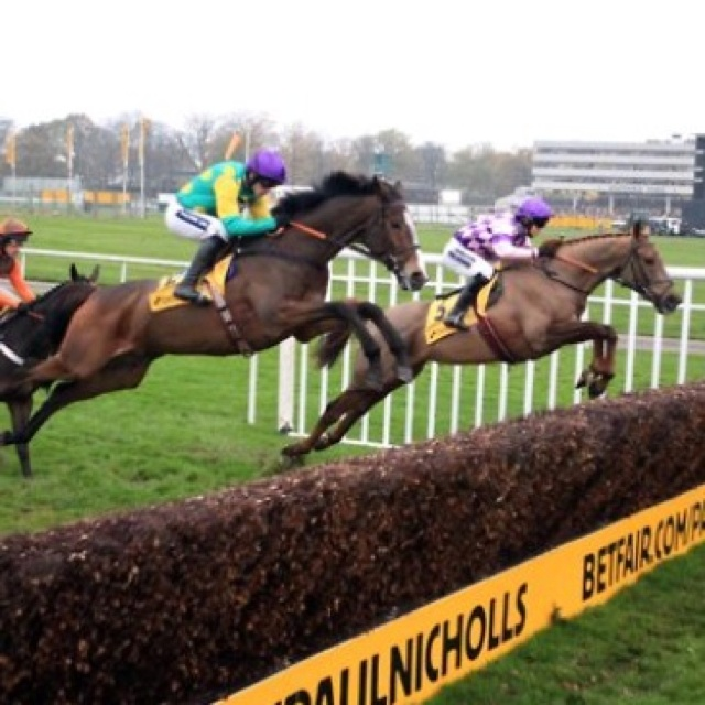 29 best images about steeplechase on pinterest iroquois