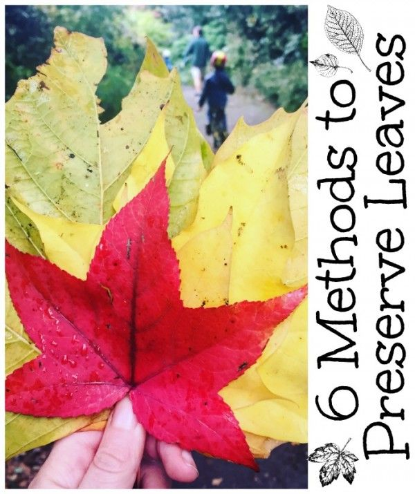How To Preserve Leaves (6 Methods)