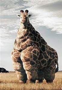 giraffe on steroids