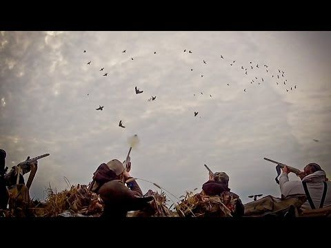 ▶ Waterfowl Hunting: So You Want To Be A Waterfowl Hunter - Fowled Reality - YouTube
