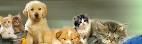 il blog del veterinario: Come promesso ecco un nuovo strumento di dialogo ....
