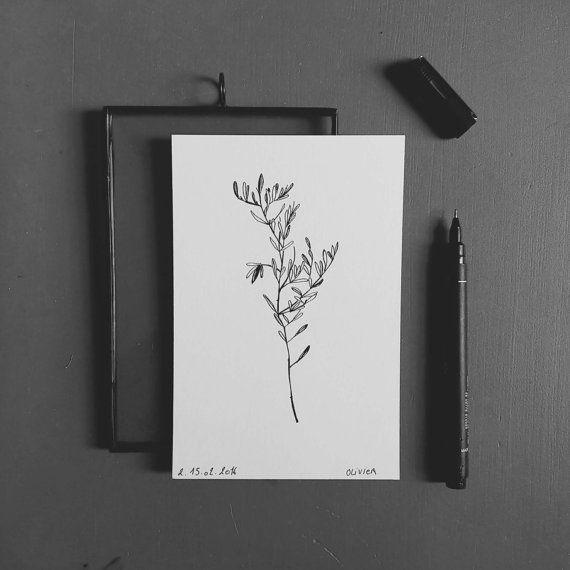 Olivier Branche d'arbre du sud-est de la France par monocotyledone
