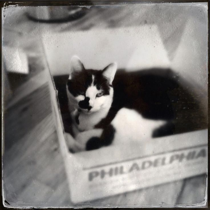 Bella loves @freshdirect! ...