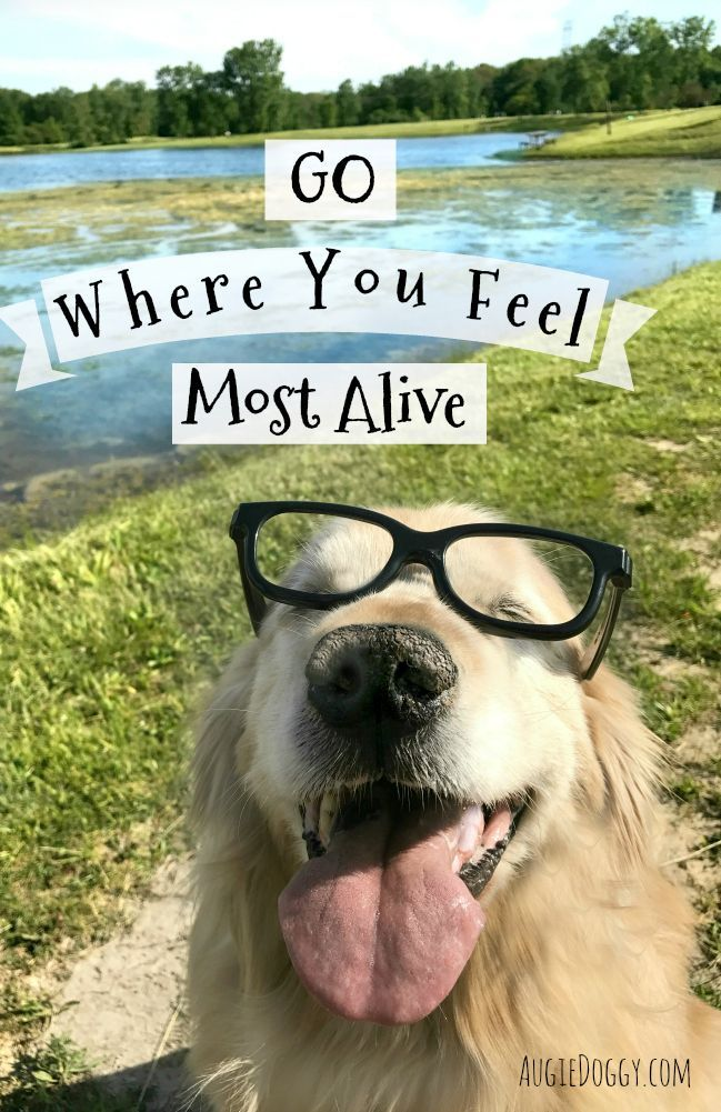 Go Where You Feel Most Alive Quote Dogs Golden Retriever Dogs