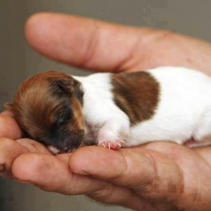 puppy sleeping in a persons hand