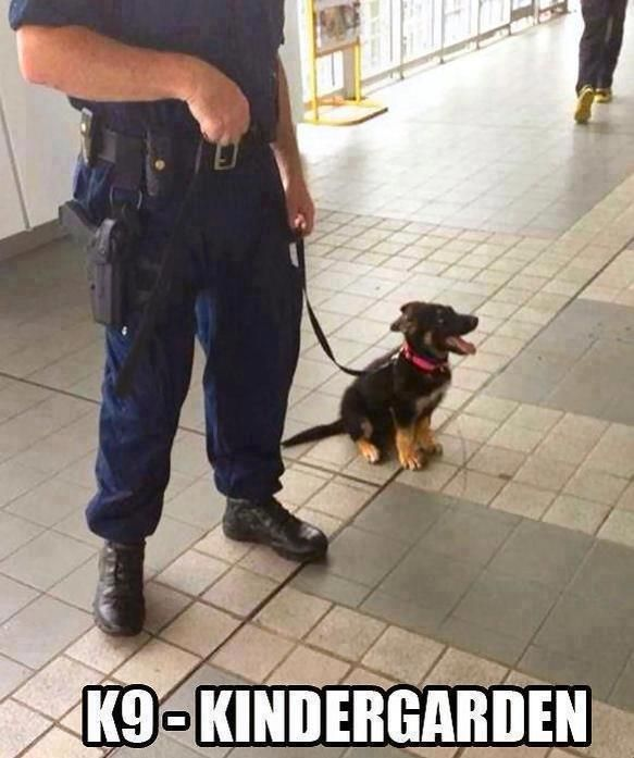 Ahhhhhh! Baby police dog :) So happy cute