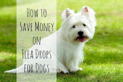 How to Save Money On Flea Drops Like Frontline For Dogs