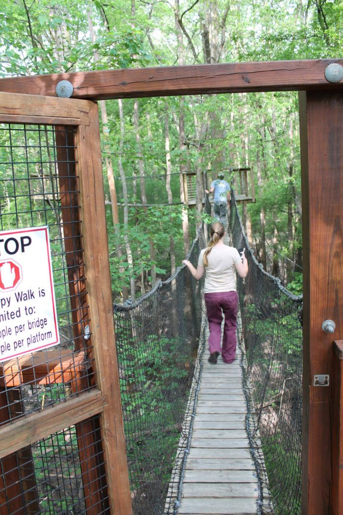 Canopy Walk - Lynches River County Park in Coward, SC